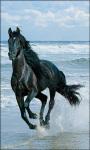 Horse Live Wallpaper Horse screenshot 2/6