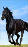 Horse Live Wallpaper Horse screenshot 3/6