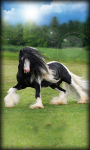 Horse Live Wallpaper Horse screenshot 4/6