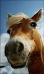 Horse Live Wallpaper Horse screenshot 5/6