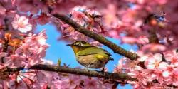 Sakura Flower 3D Wallpaper HD screenshot 2/6