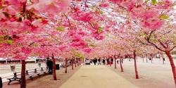 Sakura Flower 3D Wallpaper HD screenshot 3/6