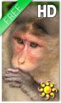 Monkey Live Wallpaper HD screenshot 1/2