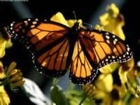 Beautiful Butterfly Image Wallpaper screenshot 4/6