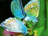 Beautiful Butterfly Image Wallpaper screenshot 5/6