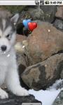 Alaskan Malamute Baby Live Wallpaper screenshot 3/4
