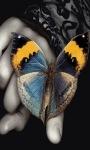 Butterfly LWP2 screenshot 1/3