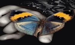 Butterfly LWP2 screenshot 2/3