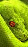 Green Snake Live Wallpaper screenshot 1/3
