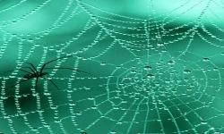 Spider Web Live Wallpaper screenshot 2/3