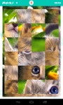 Fluffy Kittens Jigsaw Puzzle screenshot 3/6