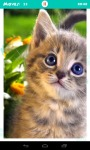 Fluffy Kittens Jigsaw Puzzle screenshot 4/6