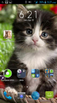 Images Of Cats And Kittens screenshot 4/4