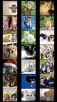 Cats Wallpapers by Nisavac Wallpapers screenshot 1/5
