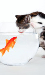Kitten vs Fish Live Wallpaper screenshot 1/3