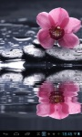 Orchid in water lwp screenshot 1/2
