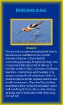Birds Life screenshot 3/5