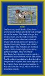 Birds Life screenshot 4/5