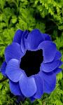 Hd Flower photo frame  screenshot 4/4