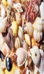Seashell and Starfish Live Wallpaper Best screenshot 2/4