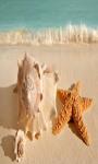 Seashell and Starfish Live Wallpaper Best screenshot 3/4