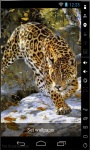Leopard Hunting Live Wallpaper screenshot 1/2