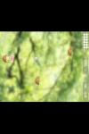 The  Amazing  Dare  Dozen screenshot 2/2