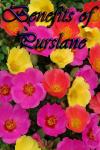 Benefits of Purslane screenshot 1/3