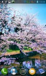 Sakura live wallpper screenshot 2/4