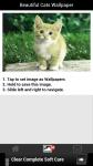 Beautiful Cats Wallpaper screenshot 3/6