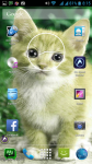Beautiful Cats Wallpaper screenshot 6/6