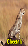 Cheetah Lite screenshot 1/3