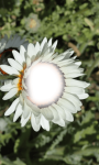 Flower photo frame pic screenshot 4/4