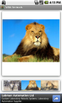 Wild Animals FREE screenshot 1/3
