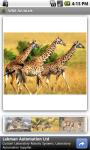 Wild Animals FREE screenshot 2/3