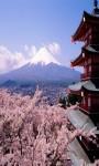 Sakura Live Wallpaper Cherry Blossom Photo Frame  screenshot 1/5