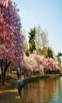 Sakura Live Wallpaper Cherry Blossom Photo Frame  screenshot 4/5