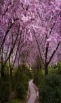 Sakura Live Wallpaper Cherry Blossom Photo Frame  screenshot 5/5