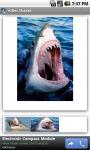 Killer Sharks screenshot 1/3