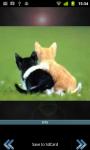 Cutie Cats screenshot 2/3