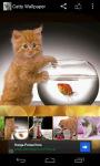 Catty Wallpaper screenshot 4/6