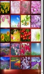Spring Flowers Wallpapers 2015 Spring Flowers Game screenshot 1/4