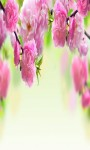 Spring Flowers Wallpapers 2015 Spring Flowers Game screenshot 4/4