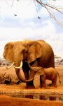 Elephants Live Wallpape screenshot 1/3
