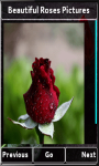 Beautiful Roses Photos screenshot 4/4