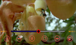 M VIDEO 3G MP3 and MP4 Player screenshot 3/6