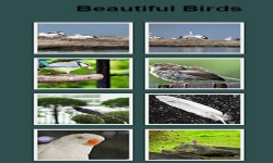 Birds Gallery screenshot 1/2