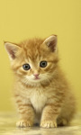 Cat Wallpapers Android Apps screenshot 1/6