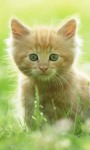 Cat Wallpapers Android Apps screenshot 3/6