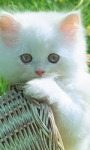 Cat Wallpapers Android Apps screenshot 4/6